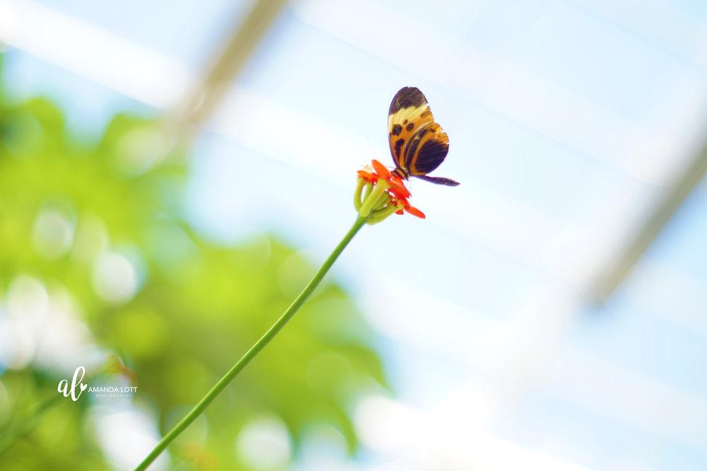 Botanical Garden 11_AL.jpg