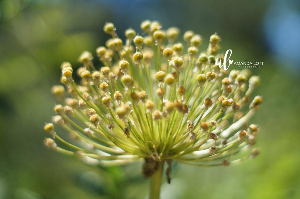 Botanical Garden 15_AL.jpg