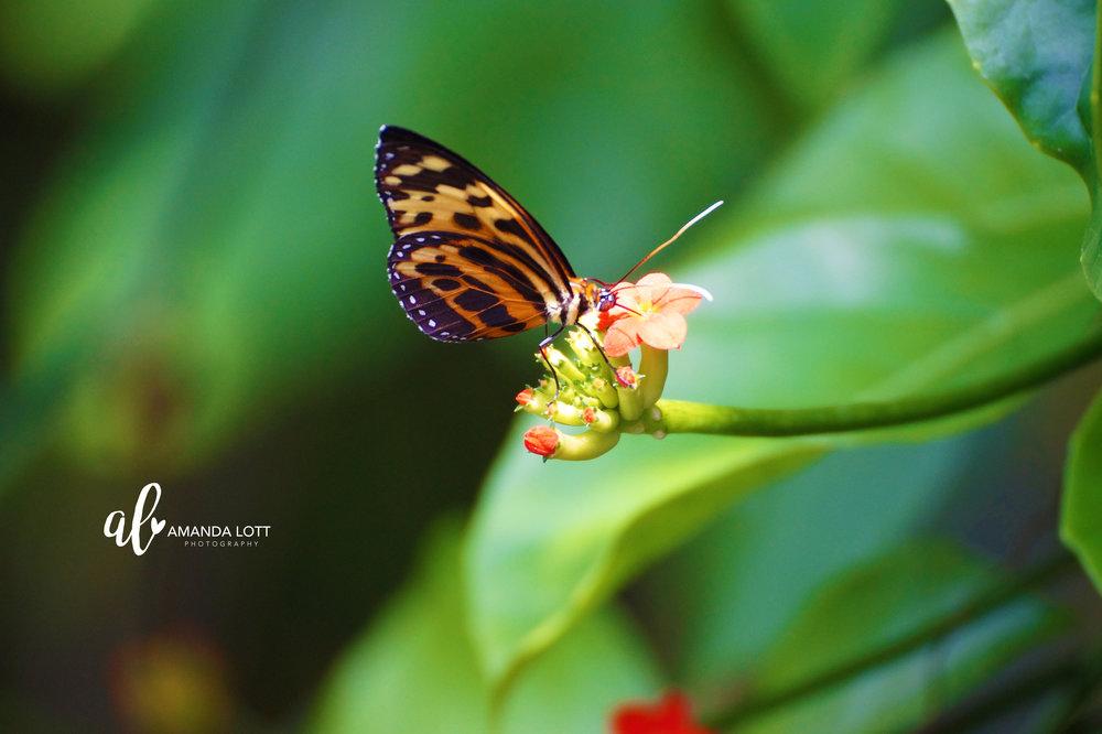 Botanical Garden 9_AL.jpg