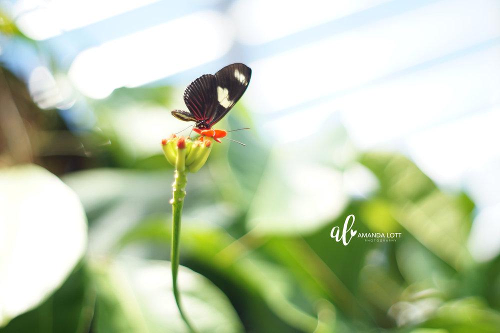 Botanical Garden 10_AL.jpg
