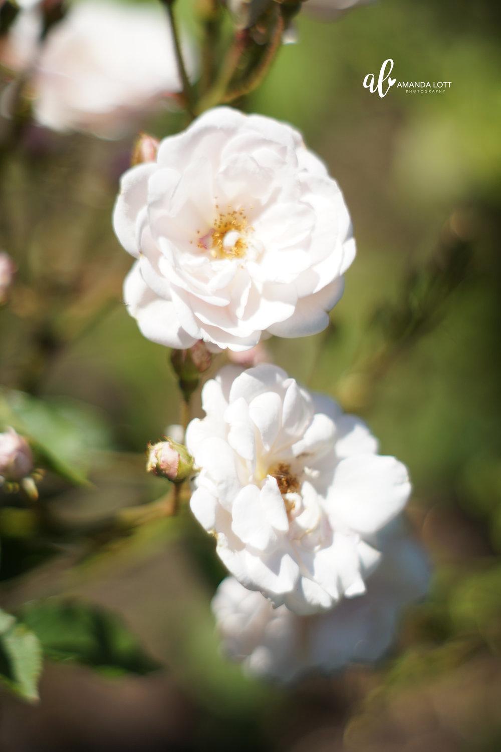 Botanical Garden 12_AL.jpg