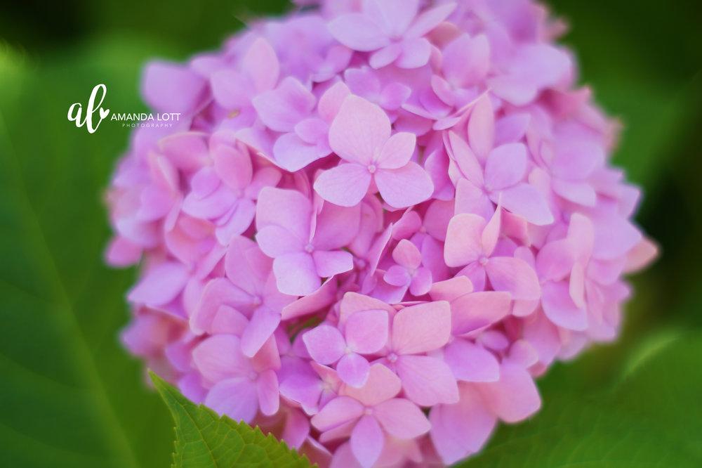 Botanical Garden 14_AL.jpg