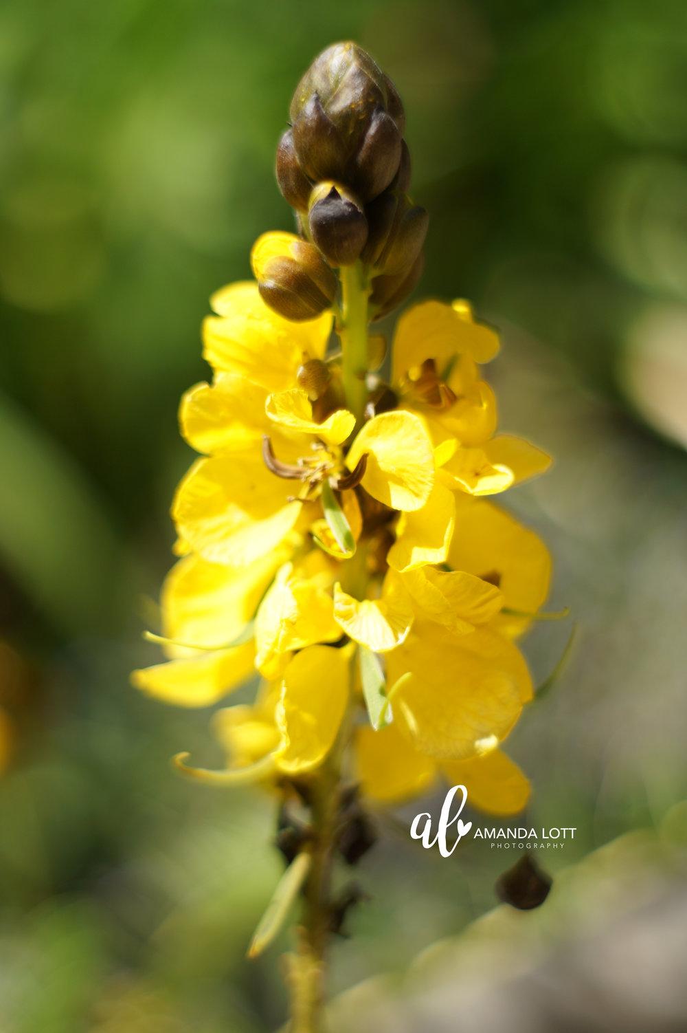 Botanical Garden 16_AL.jpg