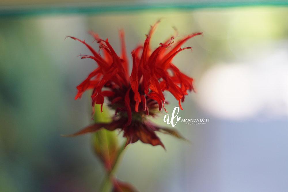 Botanical Garden 17_AL.jpg