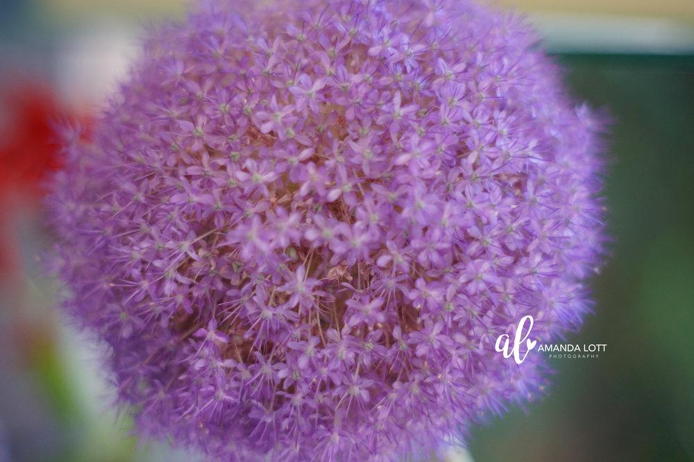 Botanical Garden 19_AL.jpg
