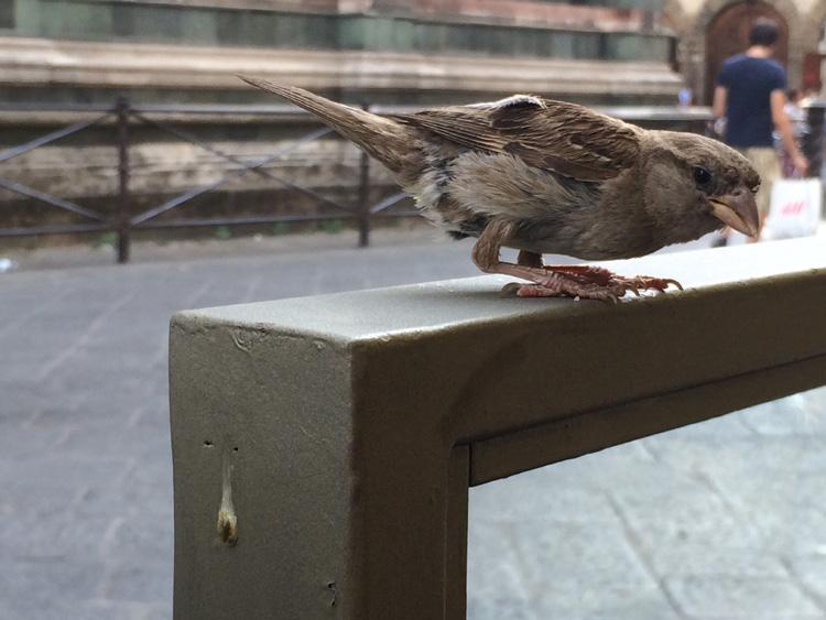 Little sparrow dinner companion.