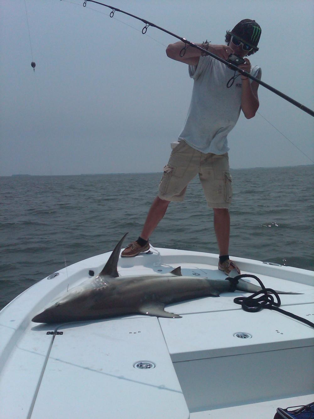 Nice Shark!