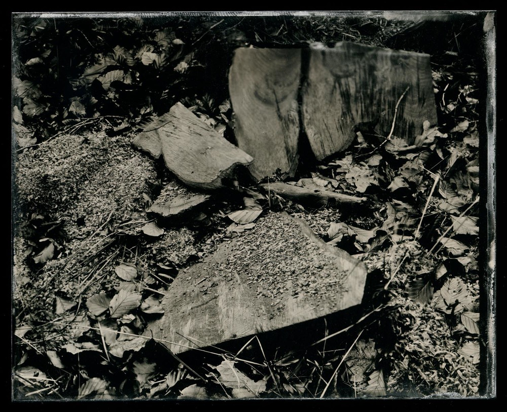 wetplate-scan157.jpg