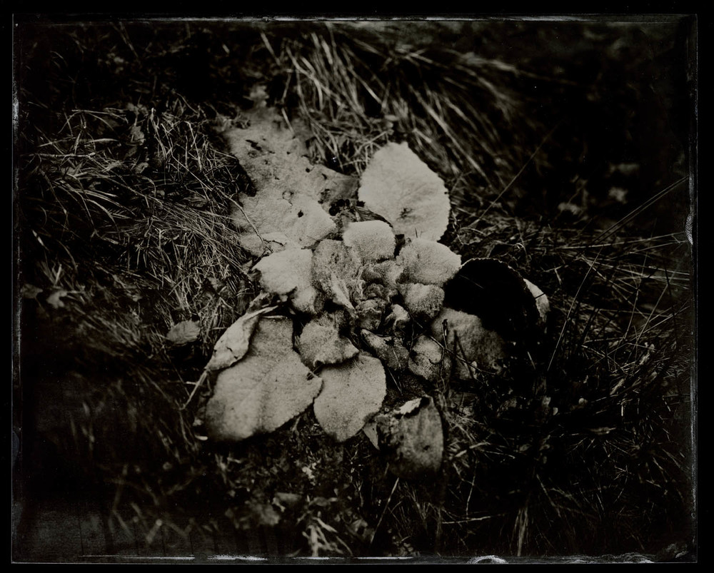 wetplate-scan164.jpg
