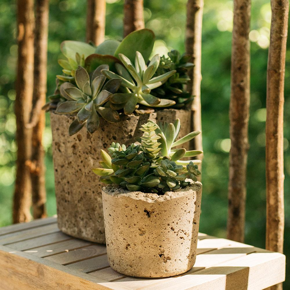 succulents.jpg