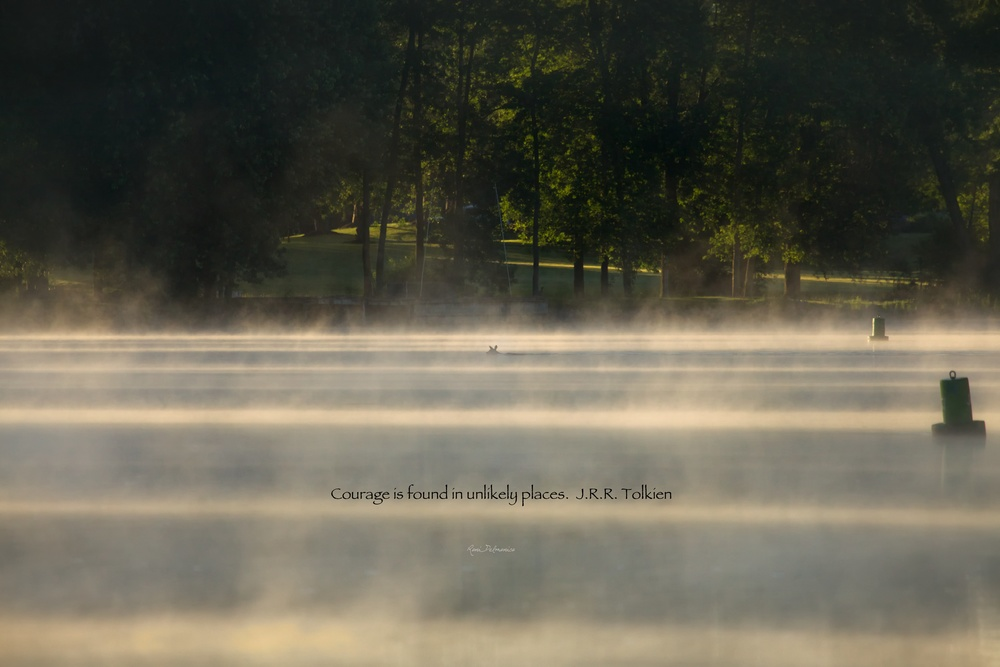 A doe quietly crosses the Seneca River on a misty morning in Baldwinsville, NY on June 21, 2014.