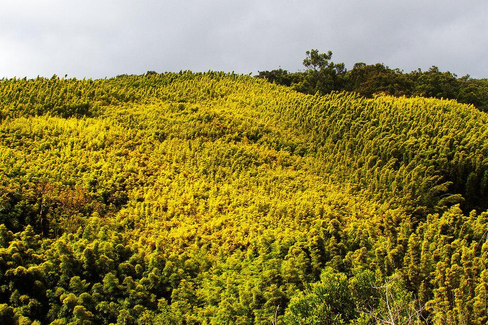 brian-wetzstein-hawaii-14.jpg