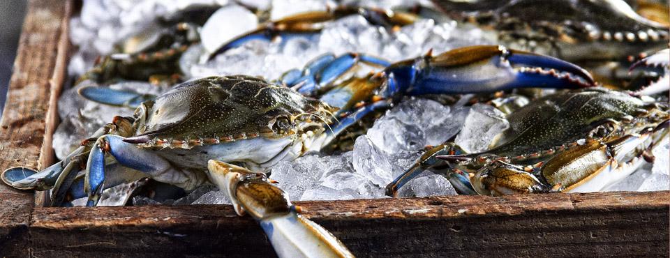 brian-wetzstein-blue-crab-a.jpg