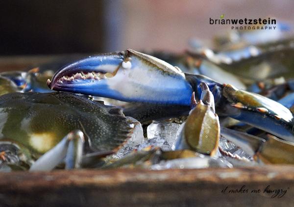 brian-wetzstein-blue-crab-08.jpg