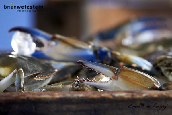 brian-wetzstein-blue-crab-04.jpg