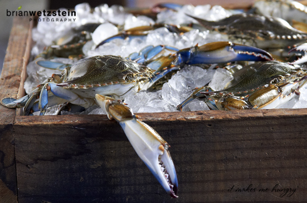 brian-wetzstein-blue-crab-05.jpg