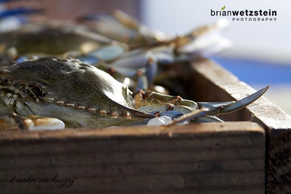brian-wetzstein-blue-crab-06.jpg