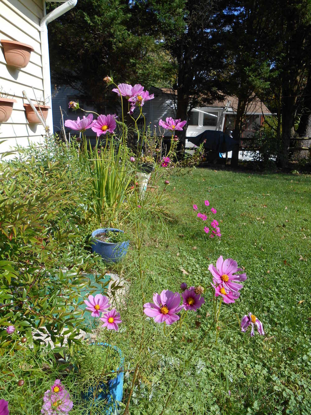 oct 18 flowers 006.JPG