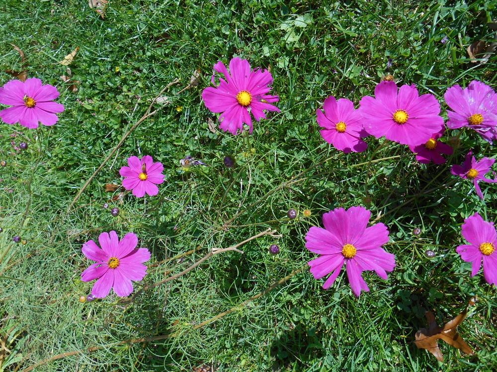 oct 18 flowers 007.JPG