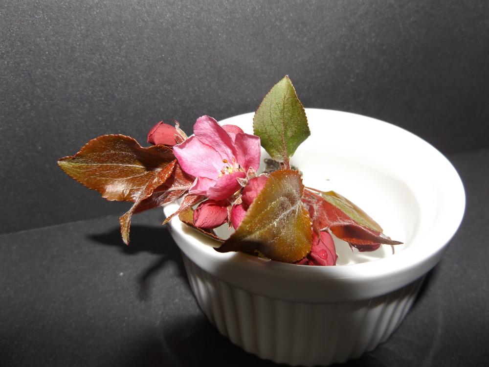 Flowering cherry ....