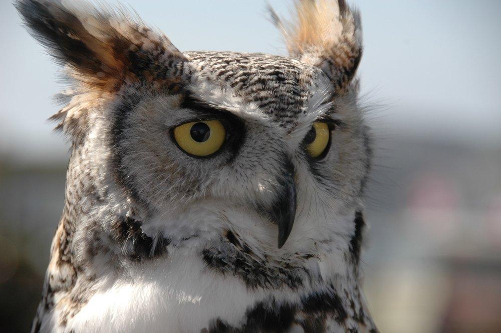 owl-2175131_1920.jpg