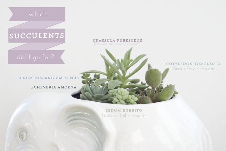 succulentschoices.png
