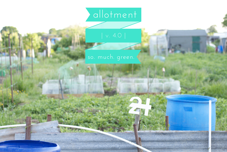 allotmentv.4.0.png