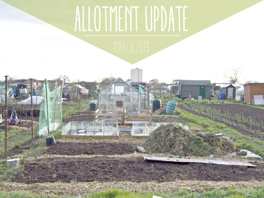 Allotment update March-01.png
