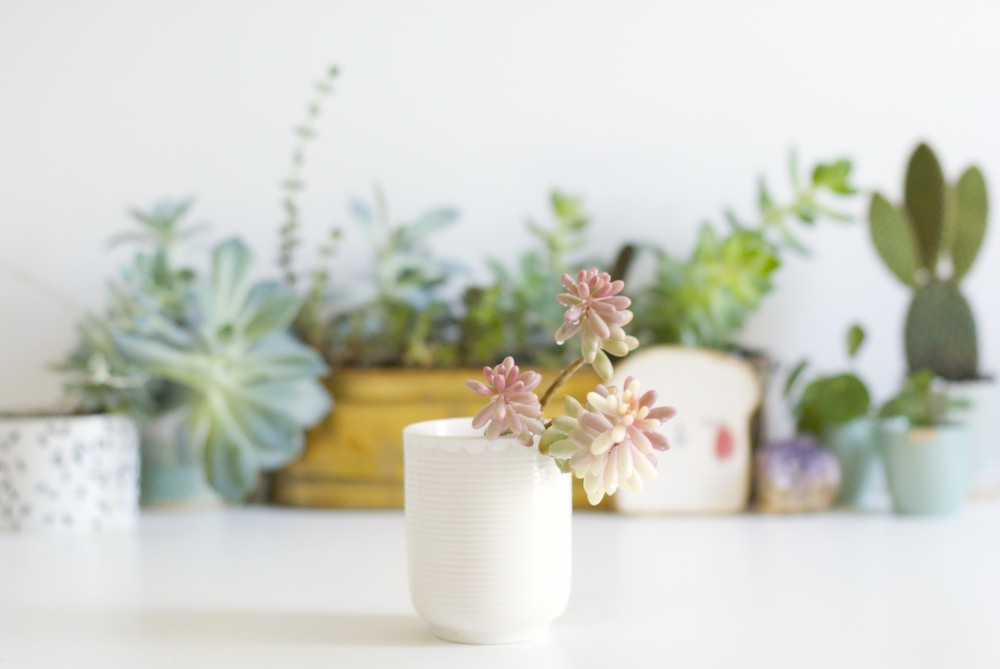 50mm fixed lens:  Close composition, great for focusing on small subjects, like the little succulent planter, forces you to think carefully about the positioning of everything in the photo, really strong depth of field. My favourite for product shots.
