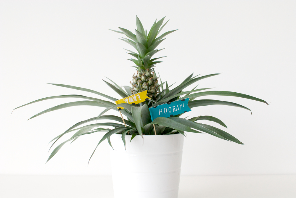 Plant Flags 2.jpg
