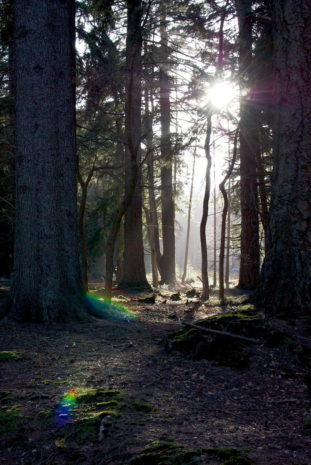 New forest 1.jpg