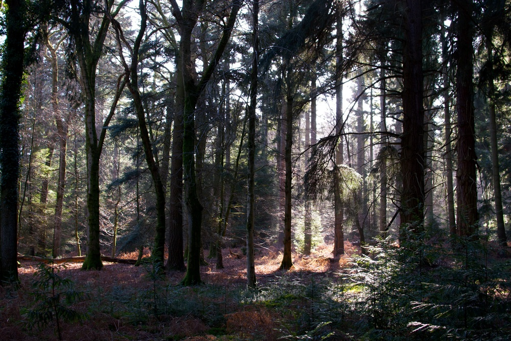 New forest 6.jpg