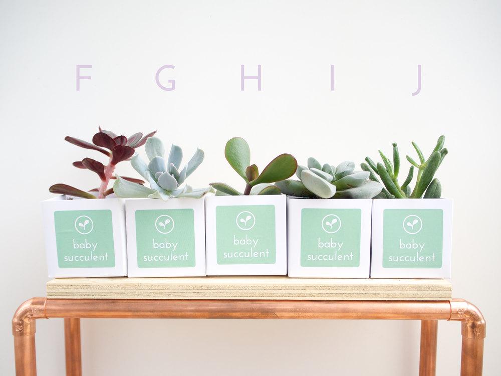 F-J Succulents-01.jpg