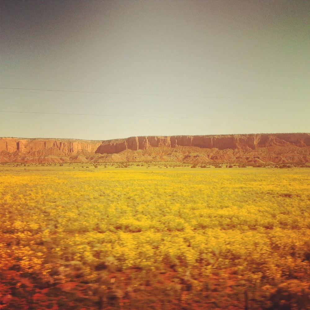 Flowers, Santa Fe