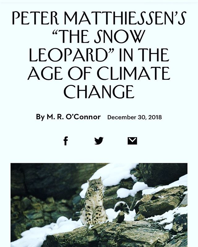"Years ago I calculated how many snow leopards were in zoos when Peter Matthiessen wrote his classic work The Snow Leopard: around 90 compared to 600 today. Finally got to write about what this statistic represents, and revisit his beautiful, profound book on its 40th anniversary for @newyorkermag. ""As Matthiessen would have been the first to point out, seeing an animal in its natural habitat and visiting one in a zoo are not the same thing. Only the former activity requires us to search and, in the process, to become seekers. Much of The Snow Leopard is about the difference between the physical act of seeing something and the more profound, spiritual act of perceiving it."""