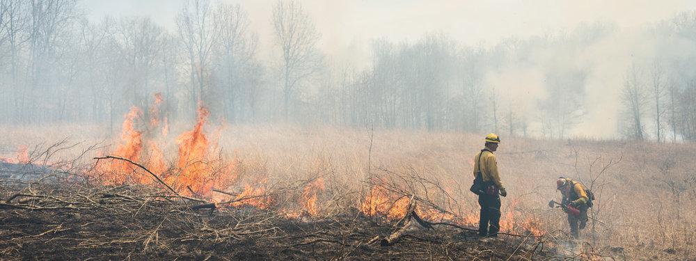 TNC-burns-6442-blog-banner.jpg