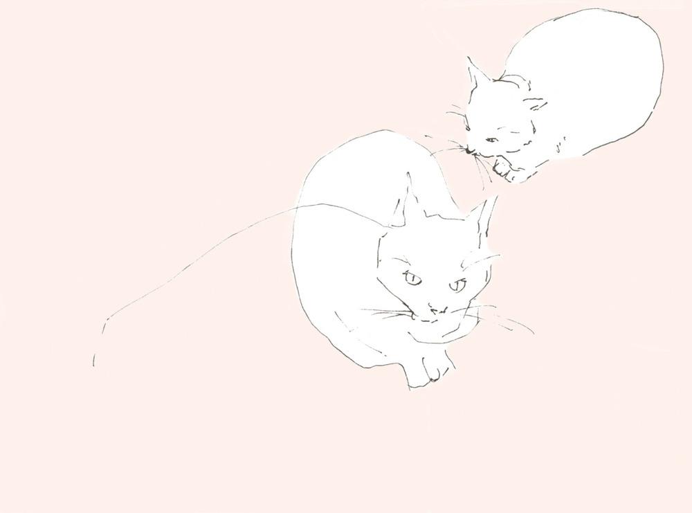 Cat no.4