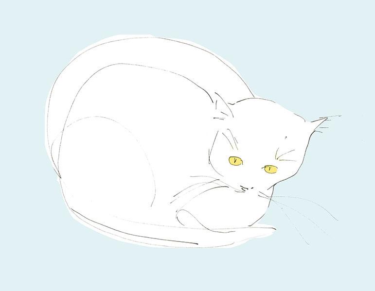 Cat.no.1