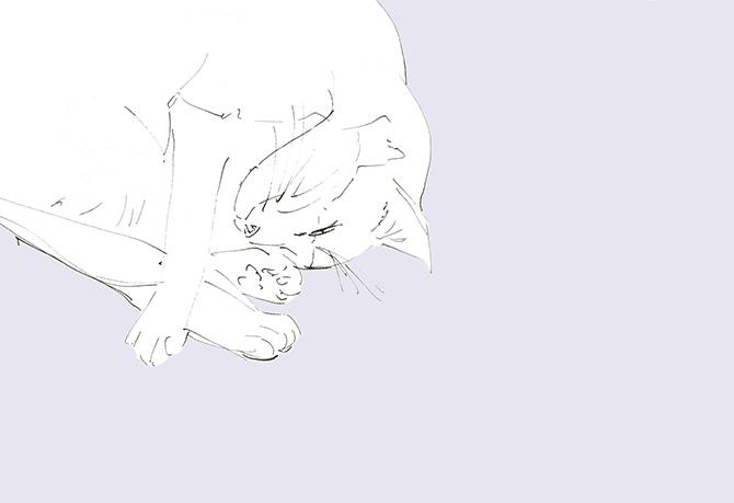 Cat.No.3