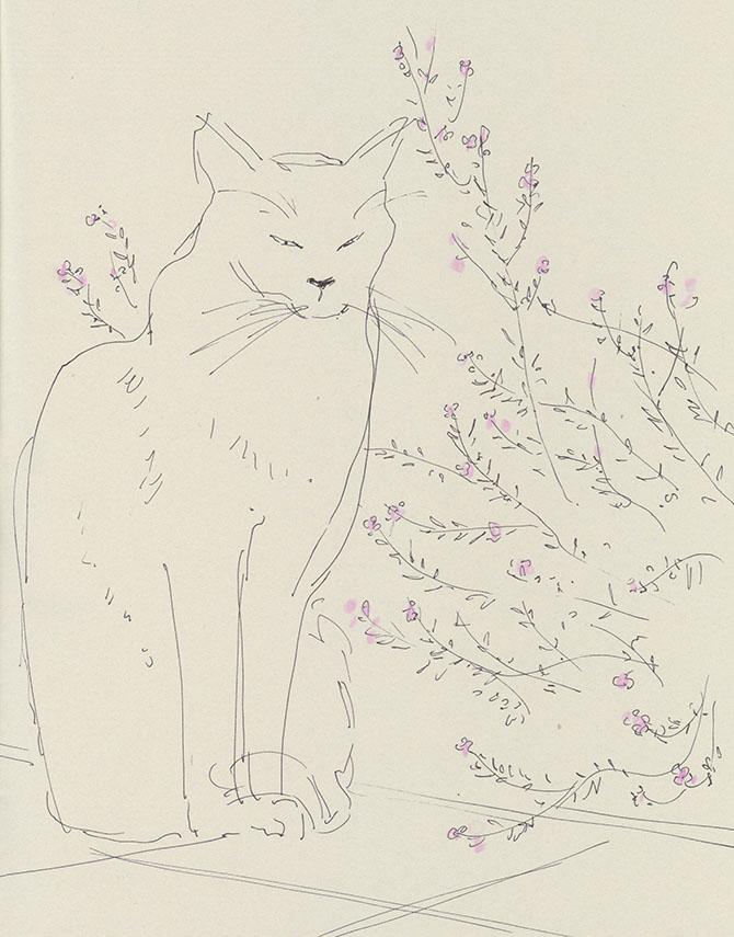 Cat & Rosemary