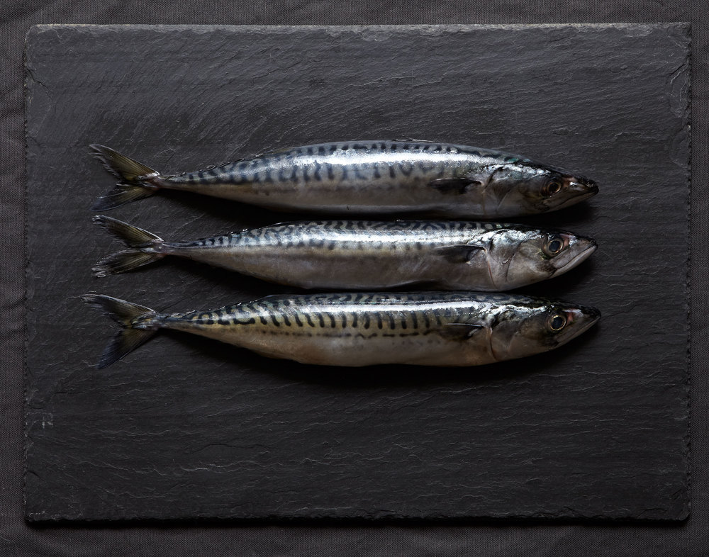 3fish.jpg