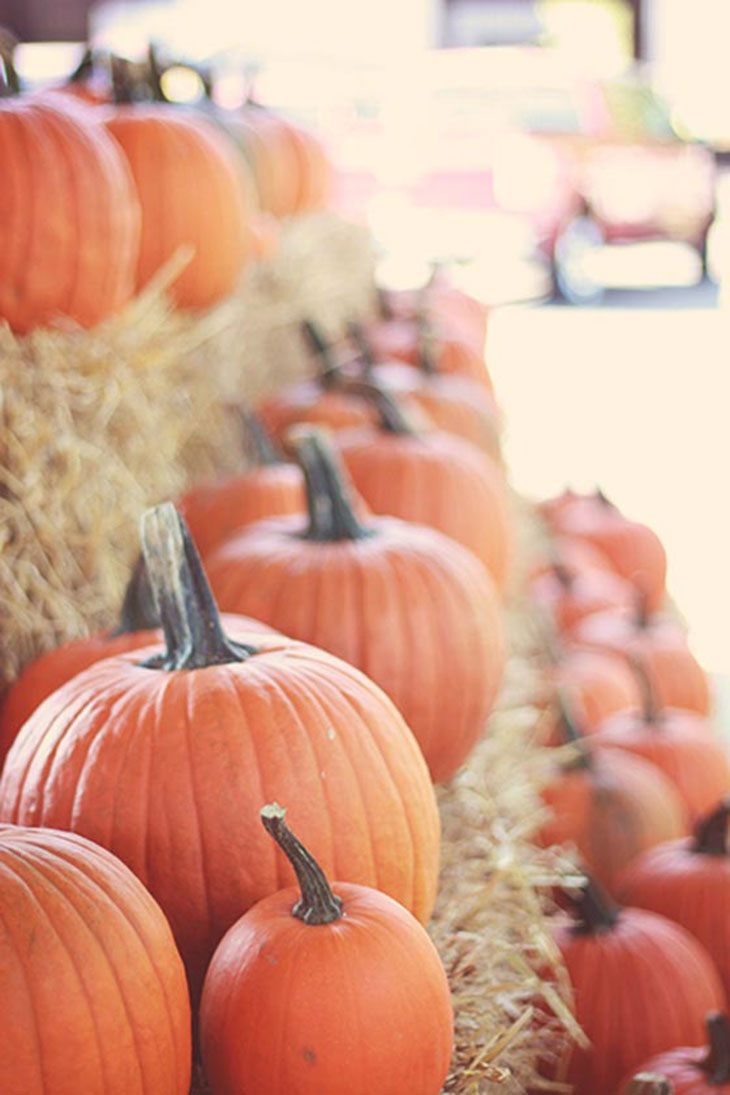 fall is here! pumpkins at the farmers market