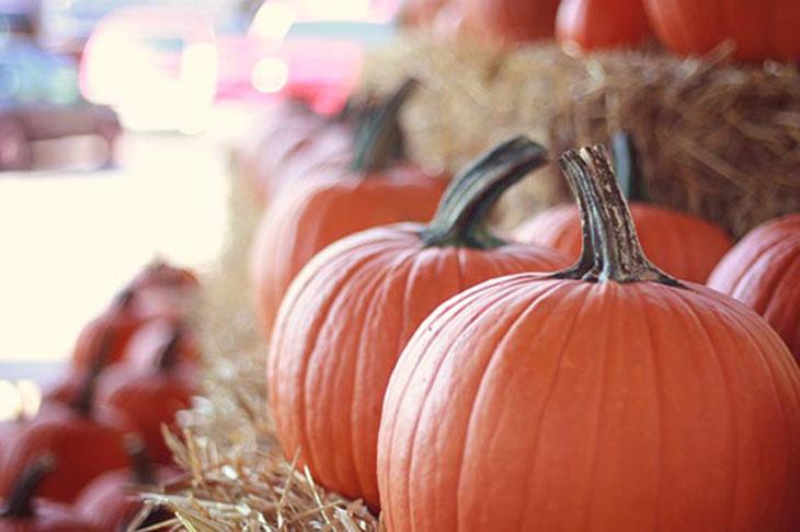 large pumpkins at the farmers market