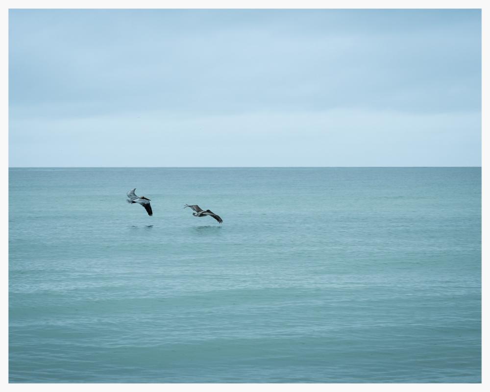 Turquoise Flight    © Rima Berzin