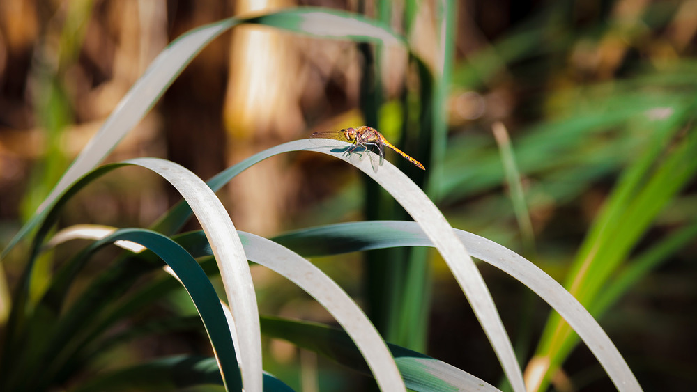 naturfotograf-outdoorshooting-der-fotograf-nbg (3).jpg