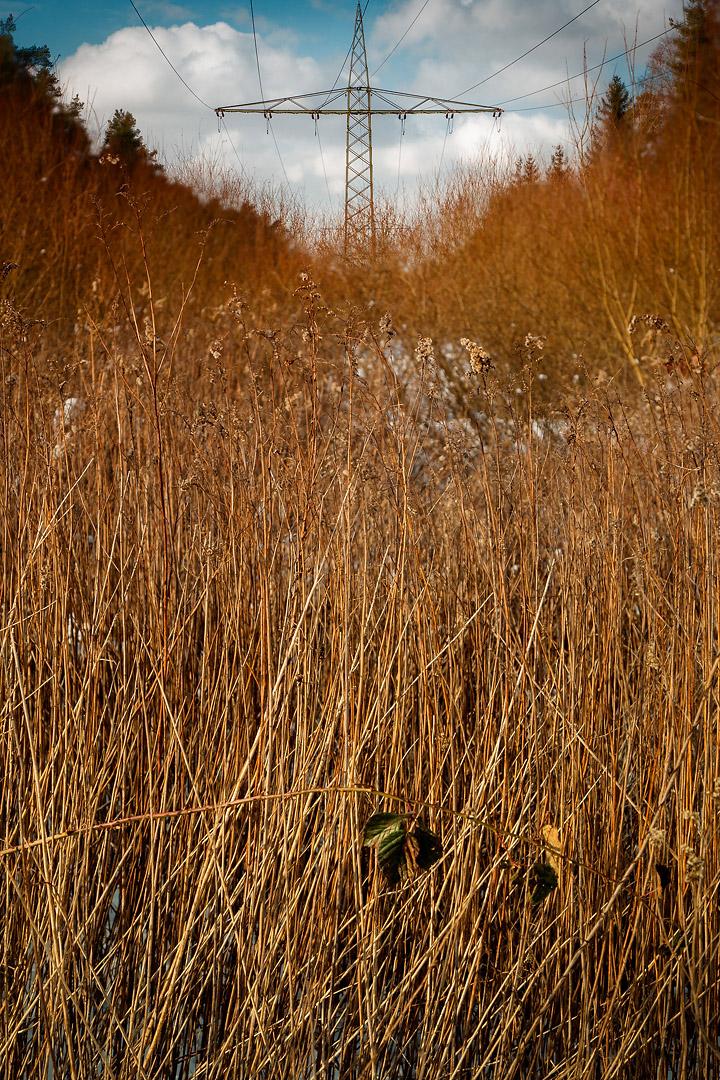 naturfotograf-outdoorshooting-der-fotograf-nbg (12).jpg