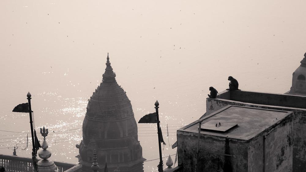 Die heimlichen Wächter der Stadt in Indien
