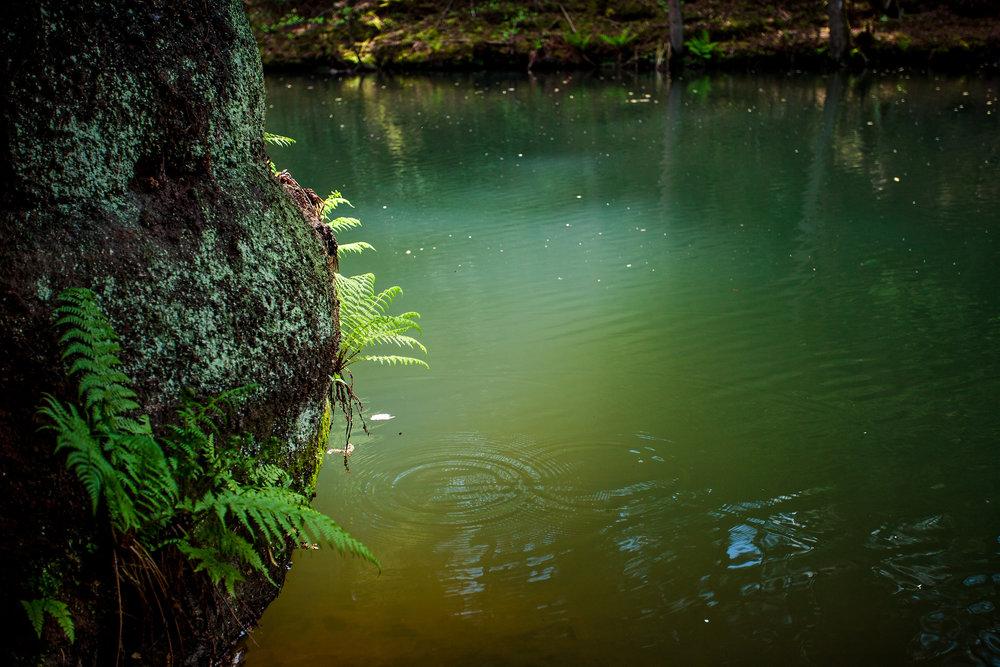 Naturfotografie-Franken-der-Fotograf-in-der-Nähe2.jpg