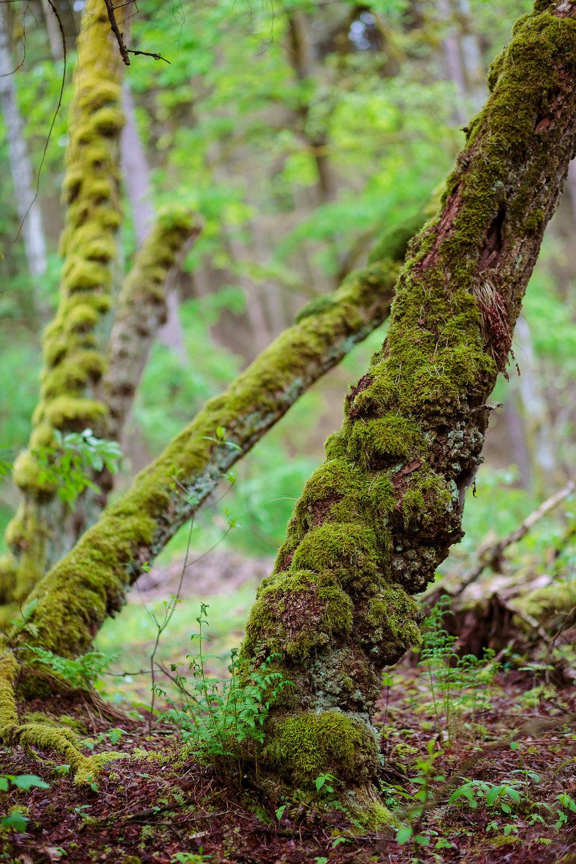 top-fotografie-frankenfotograf-naturfotografie2.jpg