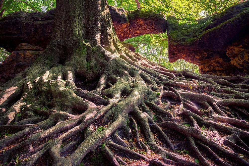 naturfotografie-top-fotografie2.jpg